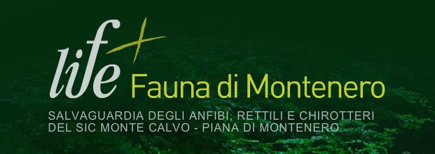 life fauna montenero